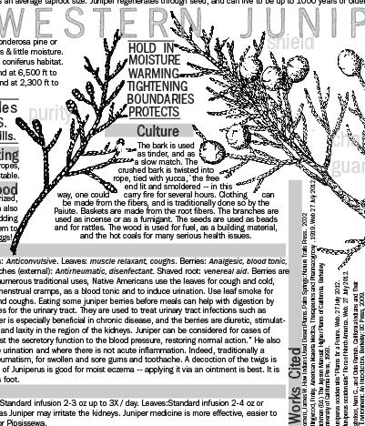 Materia Medica of Juniperus occidentalis