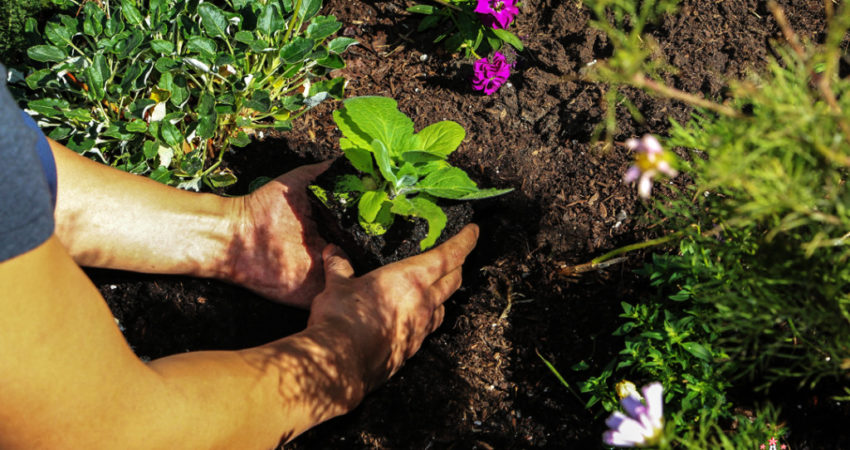 Planting-Flowers-Event-9275-1024x682