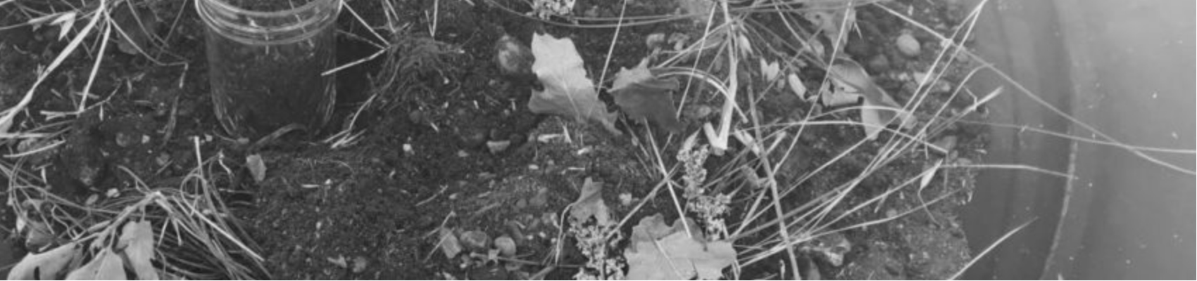 UnEarthing/ ReEarthing: Fire + Land